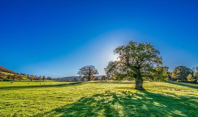 arbre dans prairie